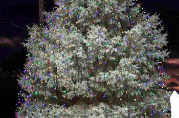 lights-of-love-2015-061